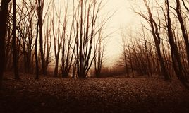 Haunted forest at sunset on Halloween Stock Photos