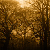 Haunted Forest Royalty Free Stock Photography