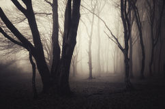 Haunted Halloween forest with with fog Royalty Free Stock Image