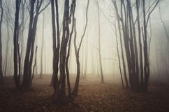 Haunted Halloween forest with fog and strange trees Stock Images