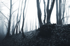 Haunted Halloween forest with fog Royalty Free Stock Photo