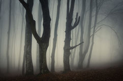 Haunted Halloween forest with mysterious fog Stock Photos