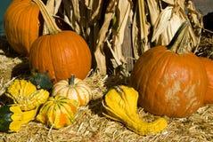 Halloween Pumpkins and gourds  Stock Photos