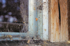Haunted house. Cobwebs in the window stock photography