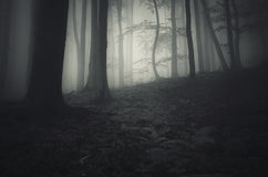 Haunted mysterious forest with fog Stock Photo