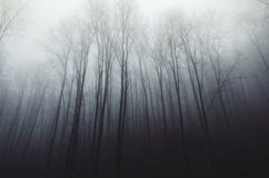 Haunted silent forest with fog through trees Royalty Free Stock Photos