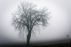 A haunted silhouette of a branched tree emerging from the autumn mist at the road Royalty Free Stock Images