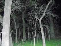 Haunted trees Royalty Free Stock Images