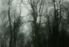 Haunted Woods Royalty Free Stock Photography