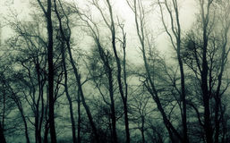 Haunted Woods Royalty Free Stock Photos
