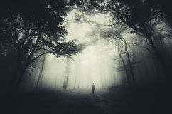 Haunted woods. Man in dark haunted woods with mist trough trees Stock Photo