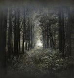 hauntied skog Arkivbild