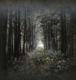 Hauntied Wald Stockfotografie