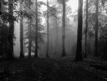haunting Foto de archivo