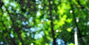Haunting. Natural Bukeh with Spider web, Preparing for the purpose of survival Stock Images