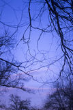 Haunting tree branches and atmospheric winter night sky Royalty Free Stock Image