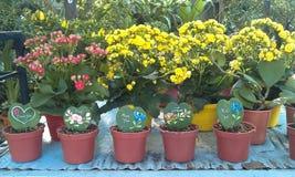 Hauptblumen- und Baumtopfdekoration Stockbild