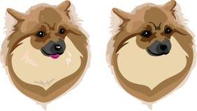 Haupthunderasse Hund Lizenzfreies Stockfoto