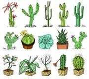 Hauptkaktuspflanzen mit den Kribbeln und den Naturelementen in den Töpfen und mit Blumen exotisch oder tropisch Sammlung von vers vektor abbildung