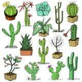 Hauptkaktuspflanzen mit den Kribbeln und den Naturelementen in den Töpfen und mit Blumen exotisch oder tropisch Sammlung von vers stock abbildung