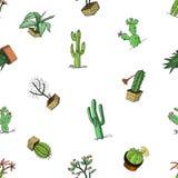 Hauptkaktuspflanzen mit den Kribbeln und den Naturelementen in den Töpfen und in den Blumen exotisch oder tropisch verschiedene S lizenzfreie abbildung