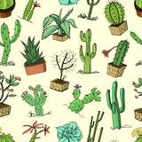 Hauptkaktuspflanzen mit den Kribbeln und den Naturelementen in den Töpfen und in den Blumen exotisch oder tropisch verschiedene S vektor abbildung