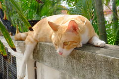 Hauptkatzen legen auf Wand nieder Stockfoto