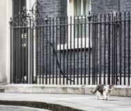 Hauptmäusefängerkatze des Downing Street-10 Stockbilder