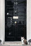 Hauptmäusefängerkatze des Downing Street-10 Stockfotografie