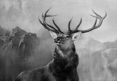 Hauptporträt eines Hirsches mit den großen Geweihen stockfotografie