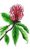 Hauptsächlicher Schutz der roten tropischen Blume Lizenzfreie Stockfotografie