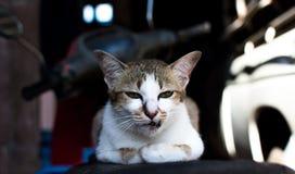 Hauptschuß der Katze Porträt der Katze auf Unschärfehintergrund Lizenzfreie Stockbilder