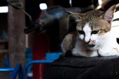 Hauptschuß der Katze Porträt der Katze auf Unschärfehintergrund Lizenzfreie Stockfotografie