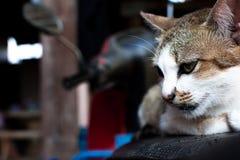 Hauptschuß der Katze Porträt der Katze auf Unschärfehintergrund Stockbild