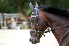 Hauptschuß eines springenden Pferds während des Trainings Lizenzfreie Stockbilder