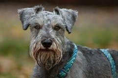 Hauptschußhundeportrait lizenzfreie stockbilder