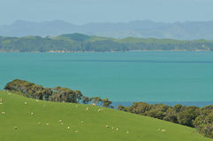 Hauraki Gulf view Royalty Free Stock Photos