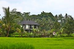 Haus auf dem Reisgebiet Stockfotos