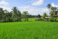 Reis f ngt landschaft in bali indonesien auf lizenzfreies for Traditionelles haus bali