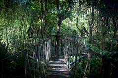 Haus auf einem Baum im Dschungel Lizenzfreies Stockfoto