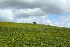 Haus auf grünem Berg unter epischem Himmel Stockbild