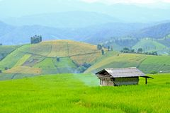 Haus auf grünem Reisfeld mit hoher Gebirgshintergrund und blauer SK Lizenzfreie Stockbilder