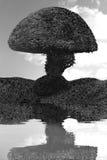 Haus-Baumreflexion des runden Baumschwarzen weiße im Wasser stockfotografie