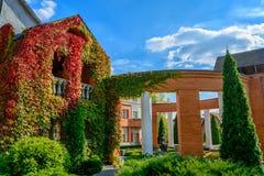 Haus bedeckt mit wilden Trauben Stockfoto