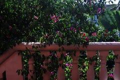 Haus in Belize Stockfotos
