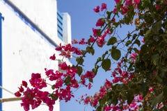 Haus blau u. weiß mit Bouganvilla Stockfotos