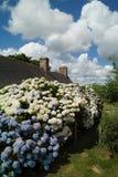 Haus in Bretagne mit Hydrangea Lizenzfreie Stockfotos