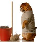 Haus, das einen Hund ausbildet Lizenzfreie Stockfotos