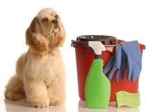 Haus, das einen Hund ausbildet Stockfotos