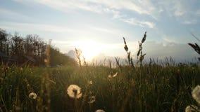 Haus in den Bergen Ansicht von unten durch das Gras das Einflüsse Das Konzept des Entspannung und der Erholung Schöner Sonnenunte stock video